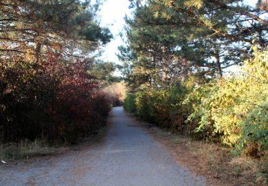 ОФ «Инициатива Арча» запустил кампанию по сбору средств для улучшения ирригации Ботанического Сада